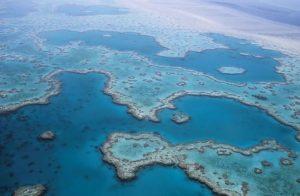 On recense plusieurs centaines d'espèces de coraux (©127071 - Pixabay).