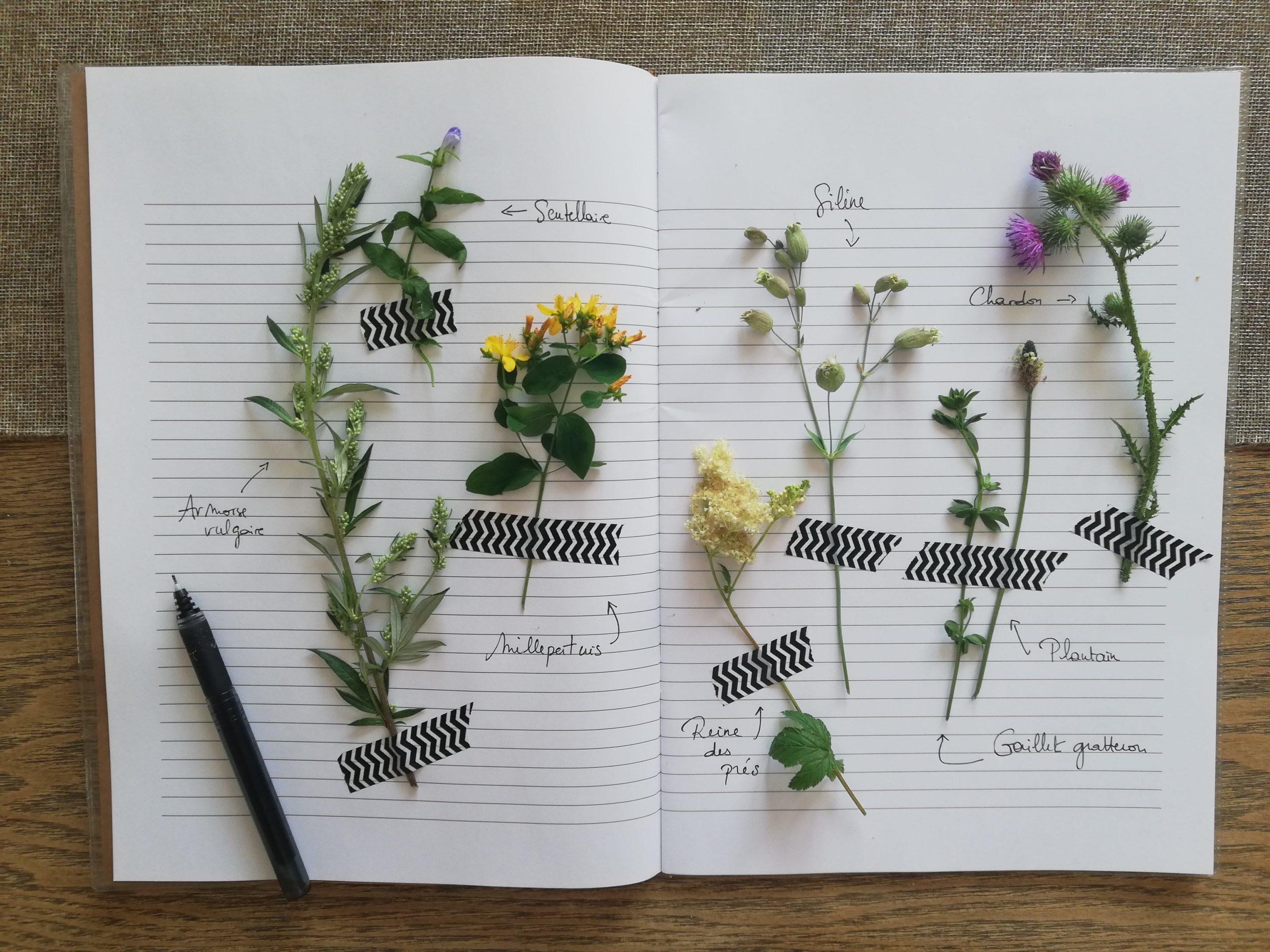 carnet à souvenirs 1 (fleur)