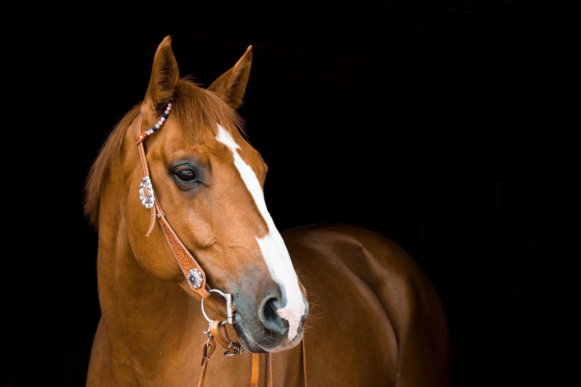 La fédération française d'équitation s'associe aux plaintes déposées.