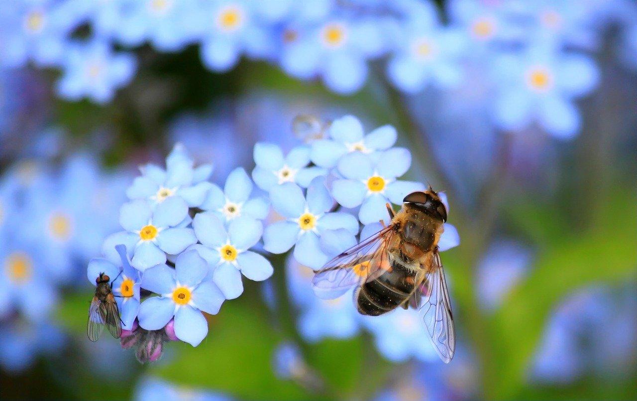 le Département s'engage en faveur des abeilles