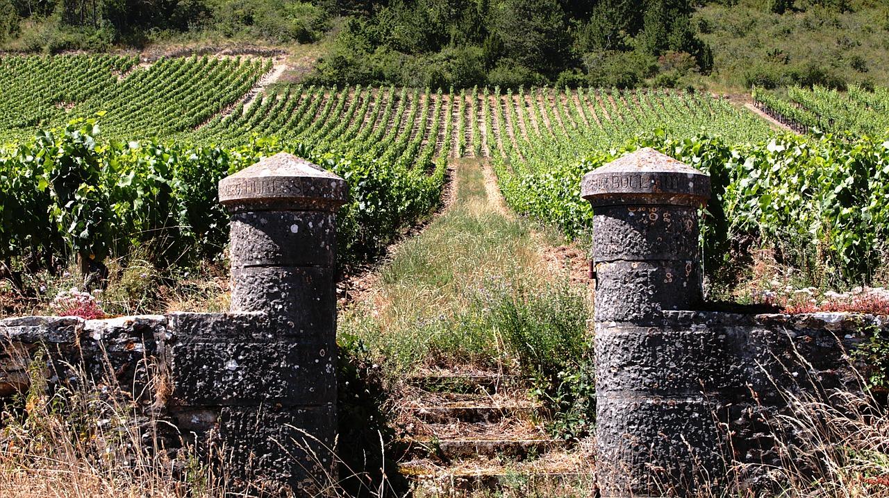 vignes ( luctheo de Pixabay)