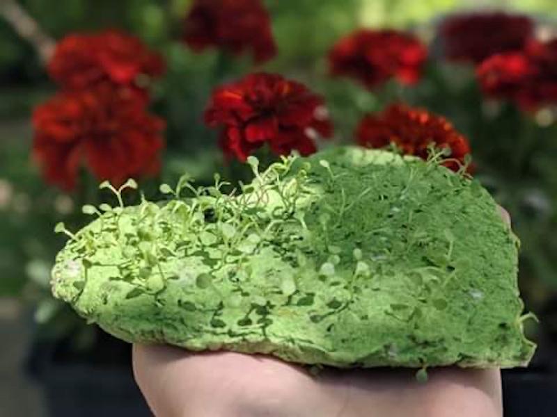 carte à planter (Fleur)