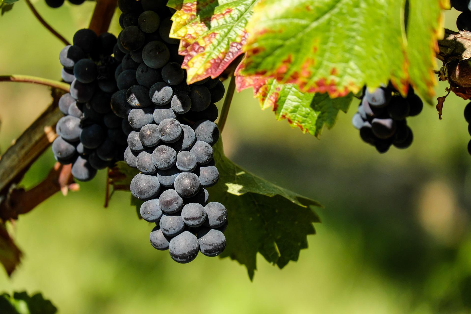 La capitale bourguignonne était en concurrence avec Bordeaux et Reims. Illsutration Image par Couleur de Pixabay